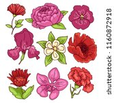 peony  rose  carnation  orchid  ... | Shutterstock .eps vector #1160872918