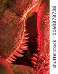 monster. close up of dinosaur...   Shutterstock . vector #1160878738