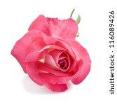 Stock photo pink rose isolated on white background 116089426