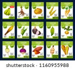 exotic vegetables price cards... | Shutterstock .eps vector #1160955988