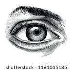 anatomy of human eye hand draw... | Shutterstock .eps vector #1161035185