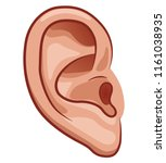 Vector Illustration Of Ear On...