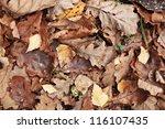 Old Yellow Fallen Autumn Leaves ...
