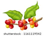 coffee tree branch with leaves... | Shutterstock .eps vector #1161119542