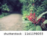 flowers used for decorating the ... | Shutterstock . vector #1161198055