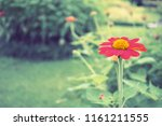 flowers used for decorating the ... | Shutterstock . vector #1161211555
