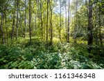 sunny summer day in the green... | Shutterstock . vector #1161346348