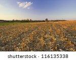 Landscape With Corn Field...