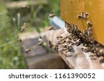 swarm of bees at beehive... | Shutterstock . vector #1161390052