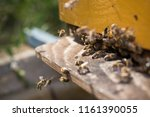 swarm of bees at beehive... | Shutterstock . vector #1161390055
