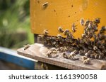 swarm of bees at beehive... | Shutterstock . vector #1161390058