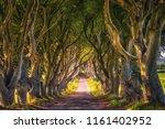 Road Through The Dark Hedges...