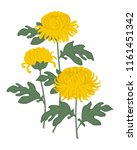 Yellow Chrysanthemums With...