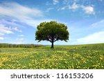 spring landscape | Shutterstock . vector #116153206