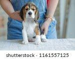 little puppy dog  | Shutterstock . vector #1161557125