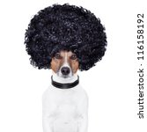 afro look hair dog funny   Shutterstock . vector #116158192