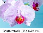 Petals of a pink orchid close...