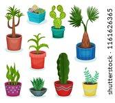 evergreen house plants in... | Shutterstock .eps vector #1161626365
