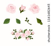pink vector roses and green... | Shutterstock .eps vector #1161682645