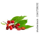 fresh  nutritious and tasty...   Shutterstock .eps vector #1161728152
