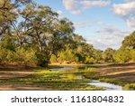 Green River Bed Landscape In...