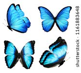 Stock photo four multicolored tropical butterflies isolated on white background 1161883648