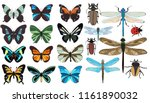 isolated  insects  butterflies ... | Shutterstock .eps vector #1161890032