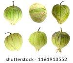 tomatillo fruit isolate white | Shutterstock . vector #1161913552
