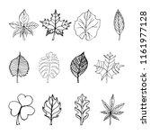 set of doodle leaves sketch...   Shutterstock . vector #1161977128