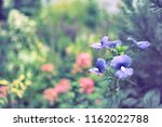flowers used for decorating the ... | Shutterstock . vector #1162022788