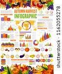 autumn harvest infographic... | Shutterstock .eps vector #1162055278