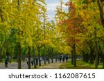 osaka  kansai  japan  november... | Shutterstock . vector #1162087615