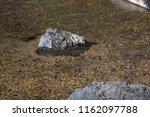rocks in shallow water | Shutterstock . vector #1162097788