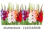 gladiolus flowers isolated on... | Shutterstock . vector #1162164028