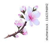flowering almond branch. vector.... | Shutterstock .eps vector #1162196842