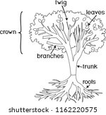 coloring page. parts of plant.... | Shutterstock .eps vector #1162220575