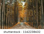 pine road of agroforestry at...   Shutterstock . vector #1162238632