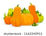 harvest of pumpkins. vector... | Shutterstock .eps vector #1162243912