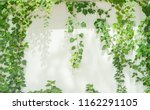 ivy leaves isolated on white. | Shutterstock . vector #1162291105