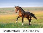 bay stallion in green field  | Shutterstock . vector #1162464142
