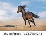 bay horse with long mane run... | Shutterstock . vector #1162464145