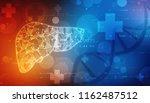 2d illustration human liver  ... | Shutterstock . vector #1162487512