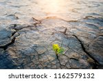 plant growing in desert drought ... | Shutterstock . vector #1162579132