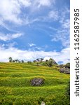 the orange daylily tawny... | Shutterstock . vector #1162587985