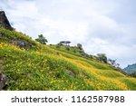 the orange daylily tawny... | Shutterstock . vector #1162587988