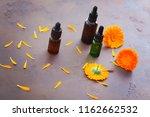 marigold or calendula essential ... | Shutterstock . vector #1162662532