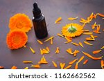 marigold or calendula essential ... | Shutterstock . vector #1162662562