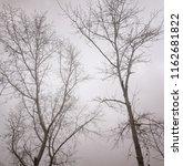 monochrome sepia image of bare... | Shutterstock . vector #1162681822