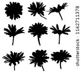 Vector Silhouettes Of Daisy...