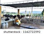 a farmer raises and raises his... | Shutterstock . vector #1162722592